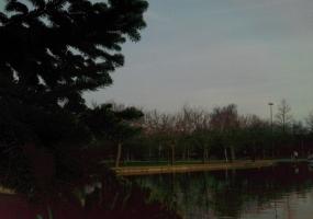 Árboles en el lago de Barañain
